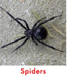pest control - spider control